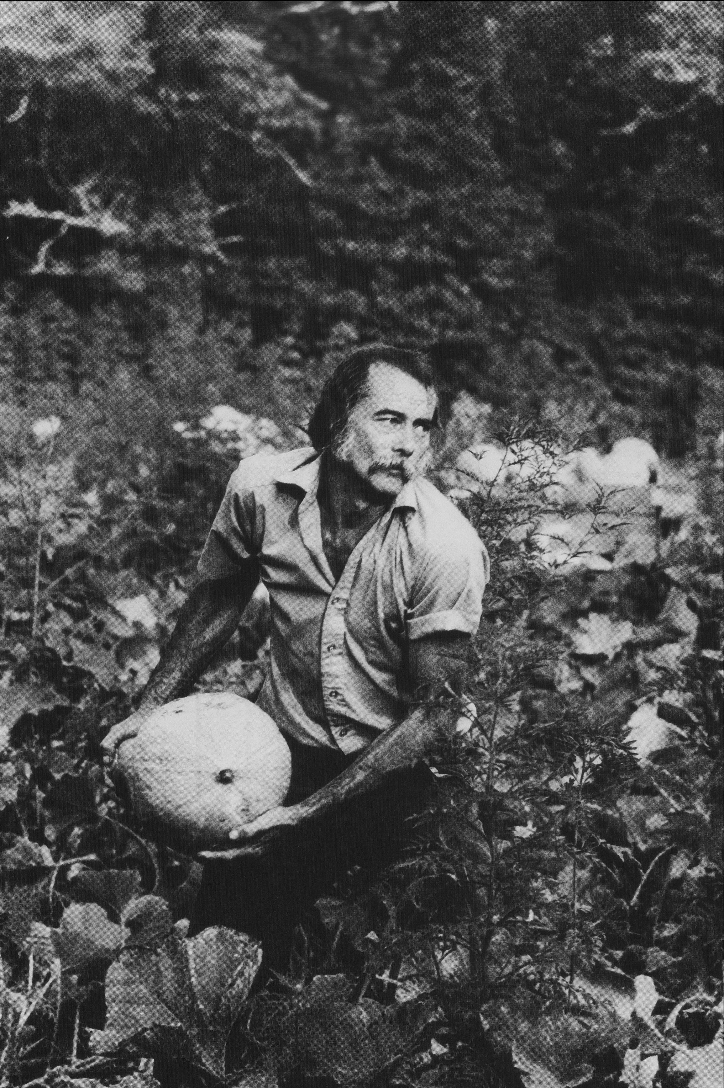 Calvin Tindal harvesting squash, Dana, NC.