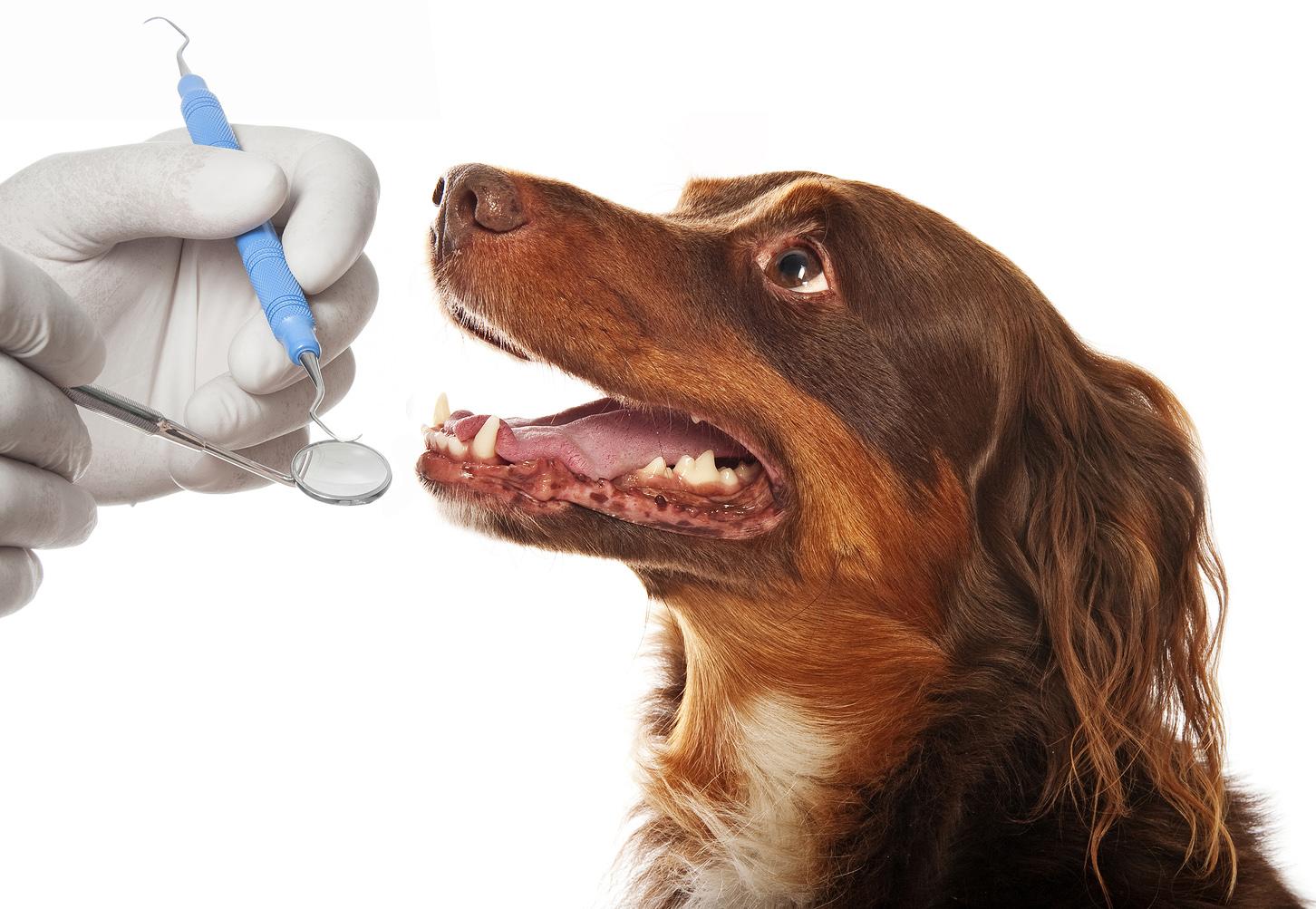 Port-Orchard-Animal-Clinic_Dr-Liz-Oien-DVM_Veterinarian_pet-care-dental.jpg