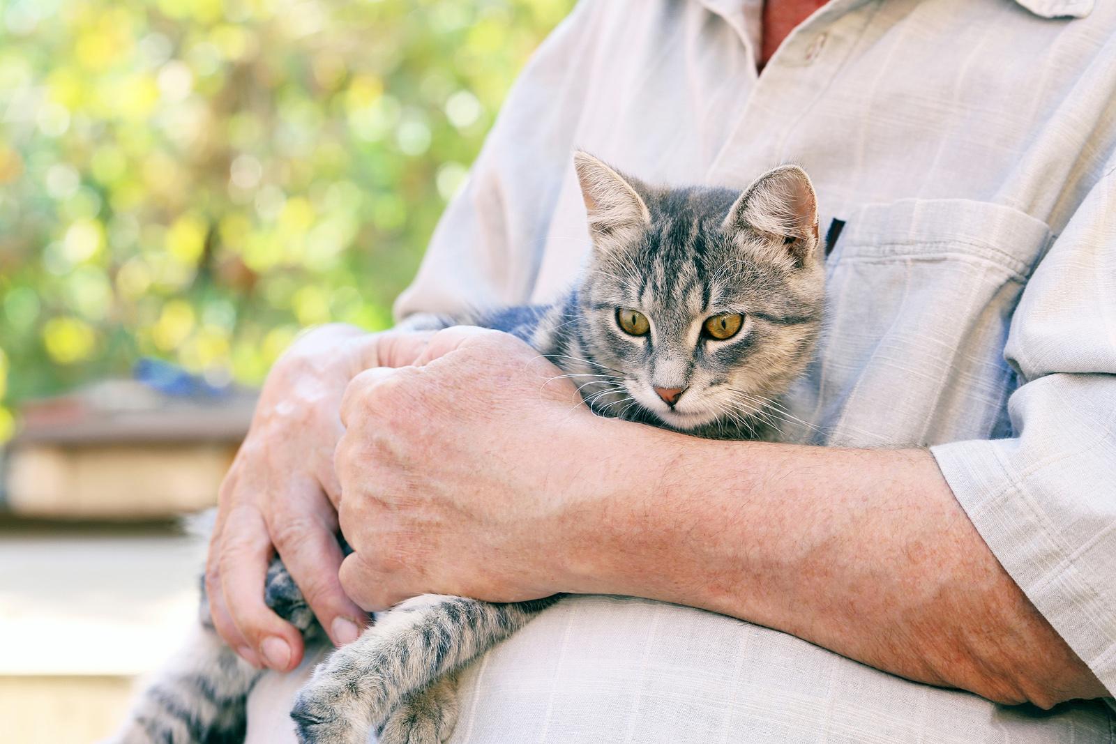 Port-Orchard-Animal-Clinic_Dr-Liz-Oien-DVM_Veterinarian_pet-care-senior-cat.jpg