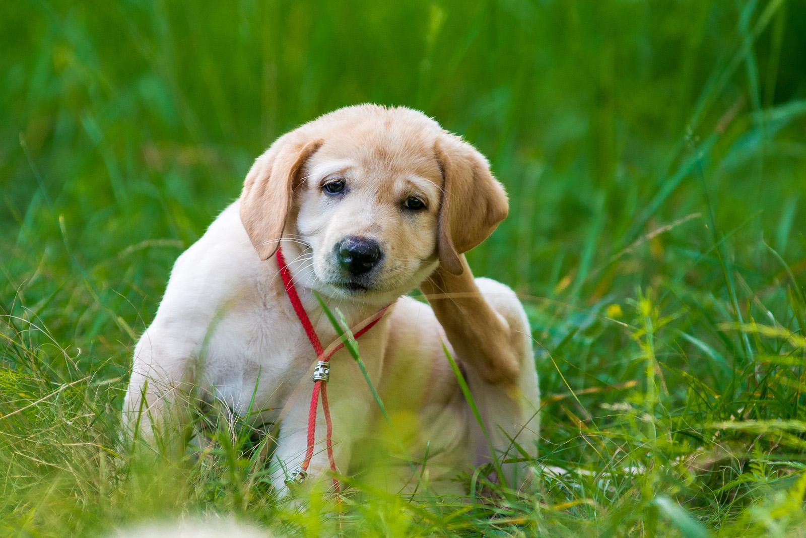 Port-Orchard-Animal-Clinic_Dr-Liz-Oien-DVM_Veterinarian_pet-care-fleas.jpg