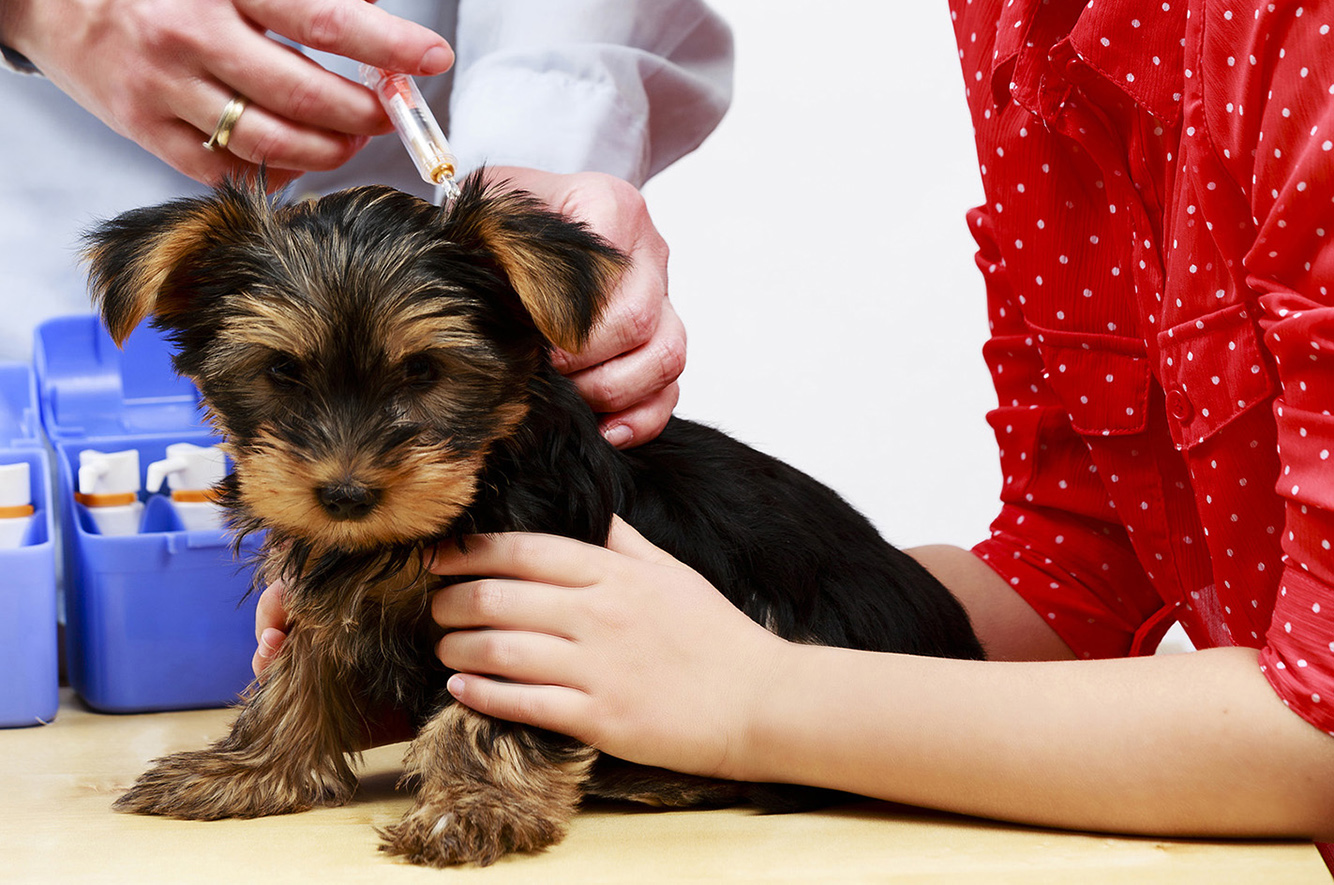 Vaccines  We recognize that not all pets have the same risk factors and that each pet has a unique lifestyle. Dr. Liz will work with you to customize a vaccination schedule which fits the lifestyle of your pet.  LEARN MORE