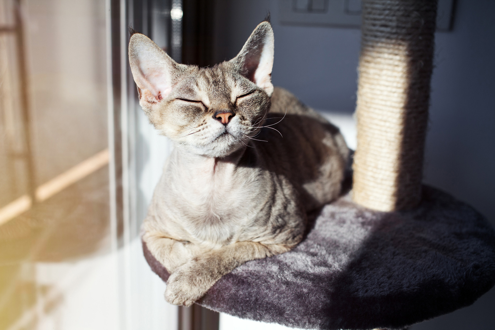 cat-kitten-health-veterinarian-port-orchard.jpg