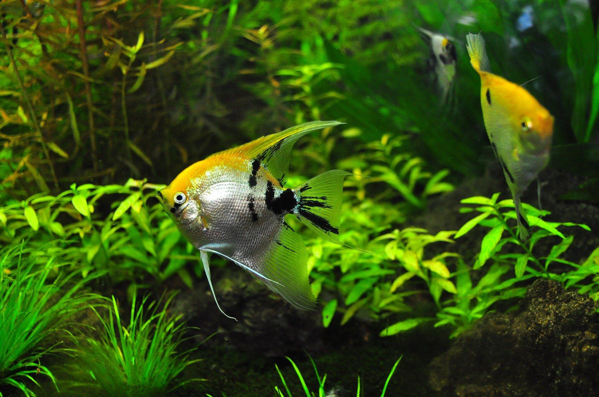 fish-1759820_1920_TMLF.jpg