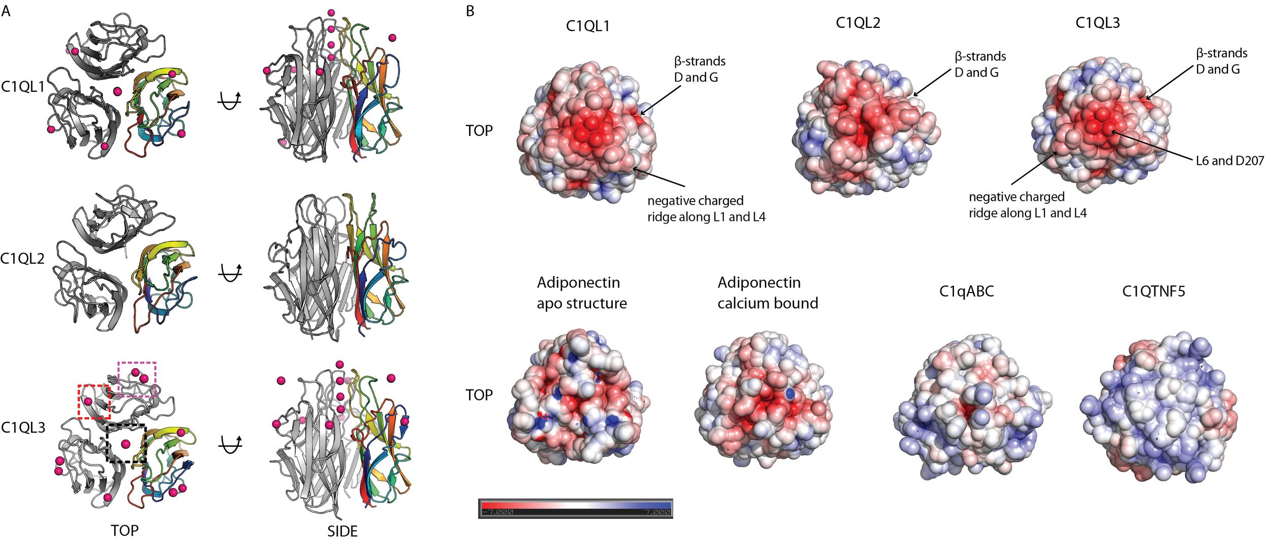 Crystal Structures of Globular C1q Domains of C1QL1, C1QL2 and C1QL3