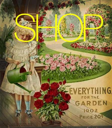 shop image.jpg