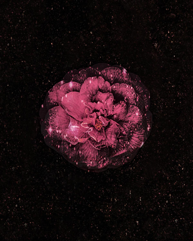 cosmicflower.jpg
