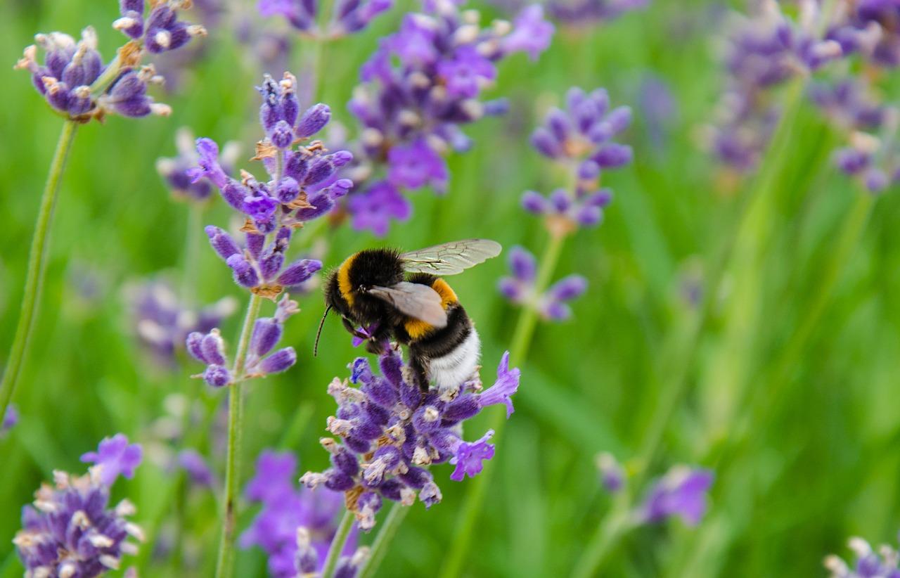 goal-traveler-lavendar.jpg