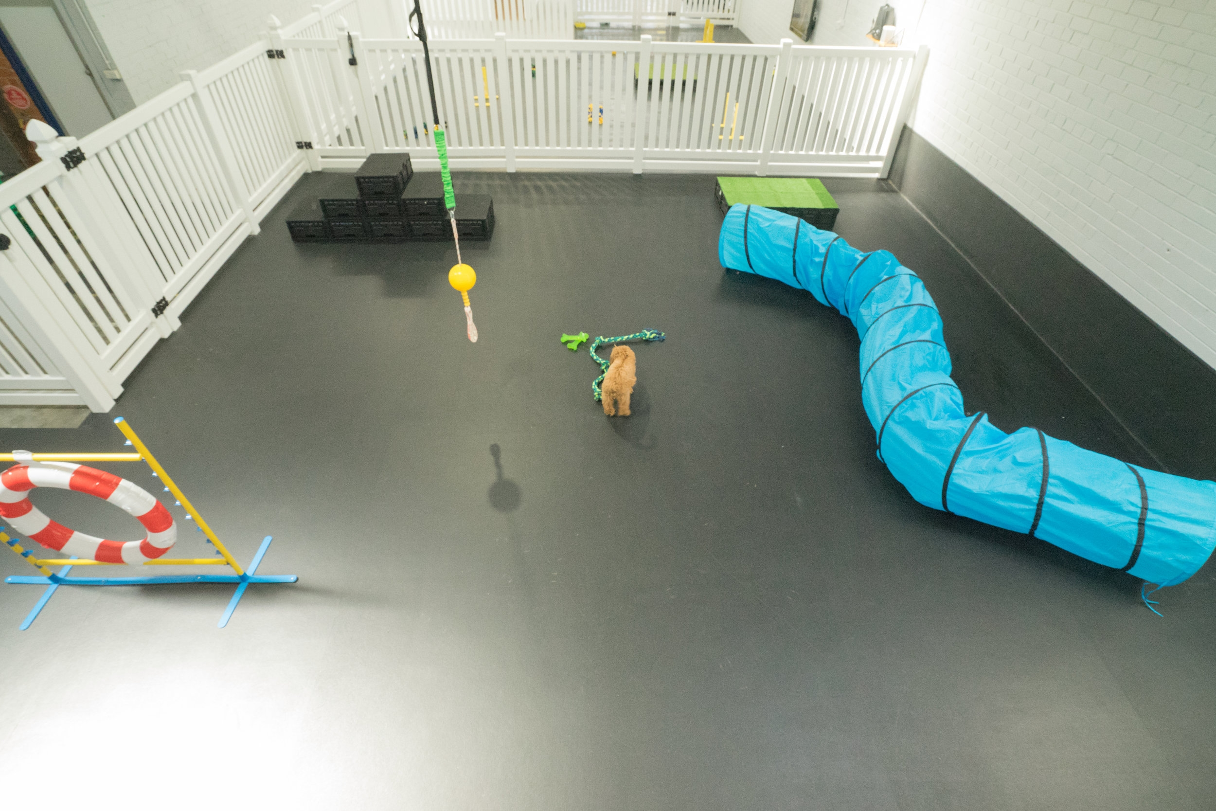 Our doggy daycare in Abbotsford, is fitted with rubberised flooring for extra joint support!