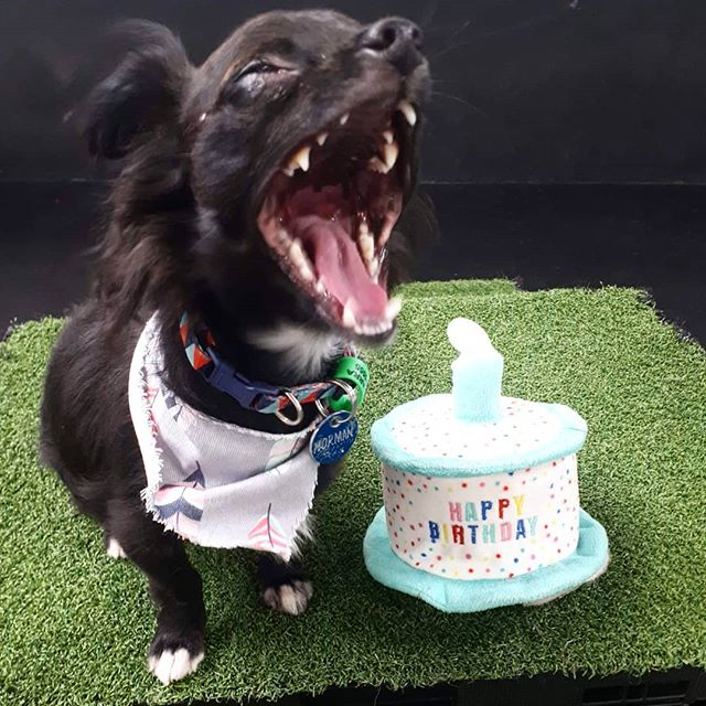🎂 You're crying but you're laughing but could also be yawning.. 🎂 💙 Happy Birthday Normiiiiie 💙 We are so proud you've grown into such a confident little man!