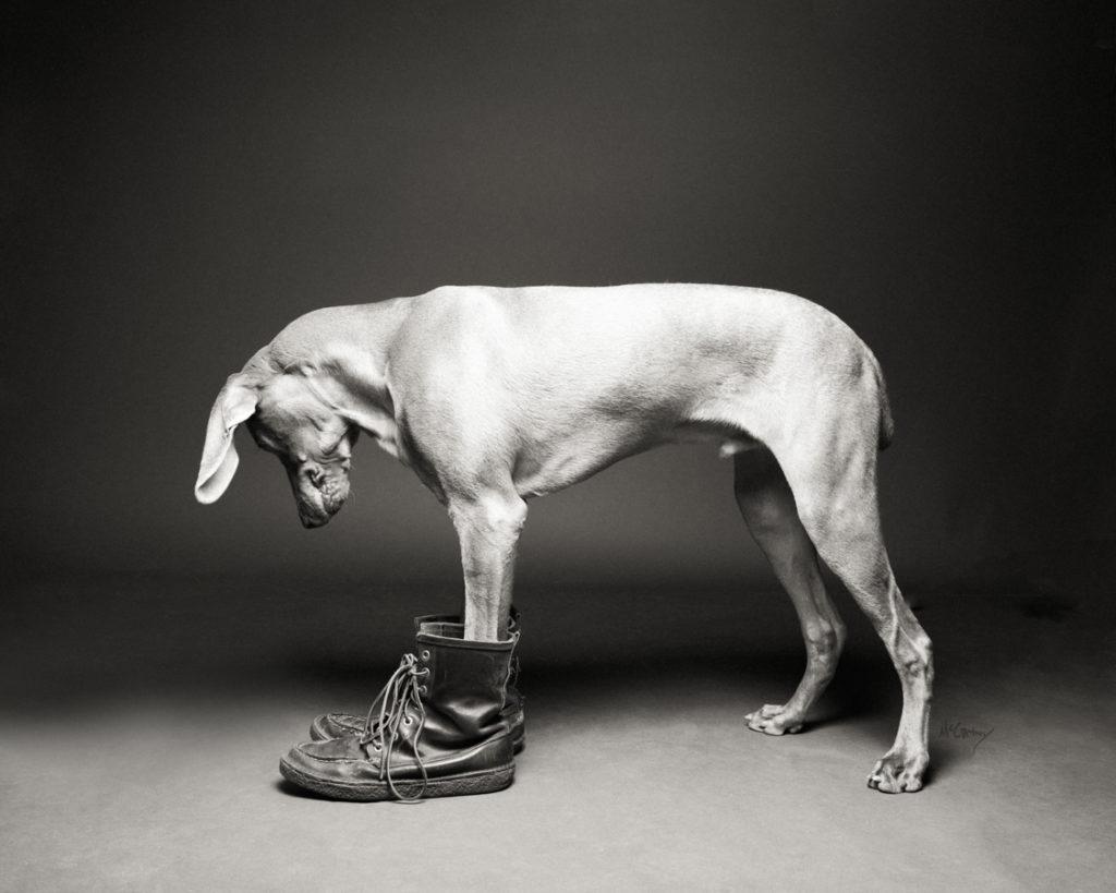 015-ShoeDogs-1024x819.jpg