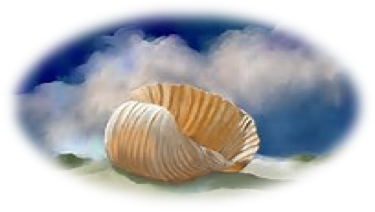 shell illustration.png
