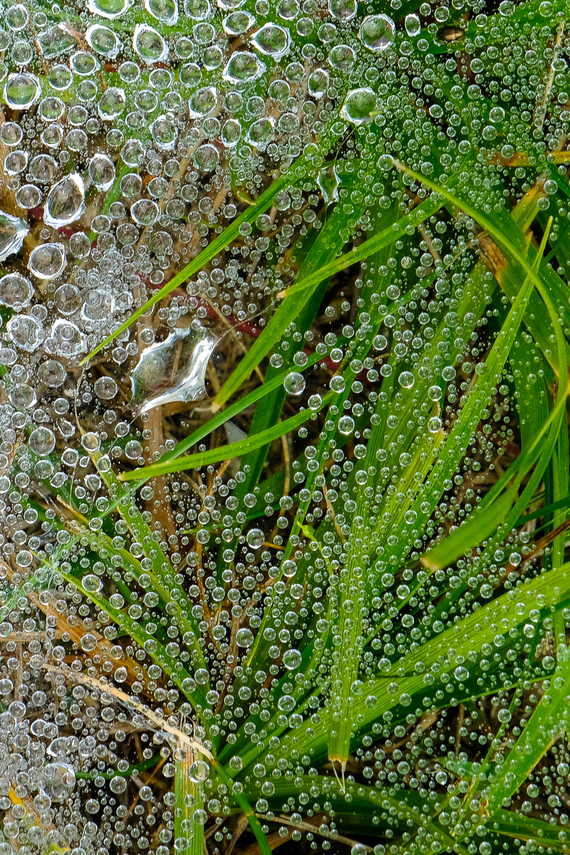 MORNING DEW 1, Boothbay, Maine