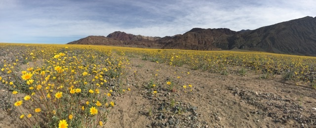 A trip to see the superbloom in Death Valley. To help support the conservation of Death Valley visit  Death Valley Conservancy