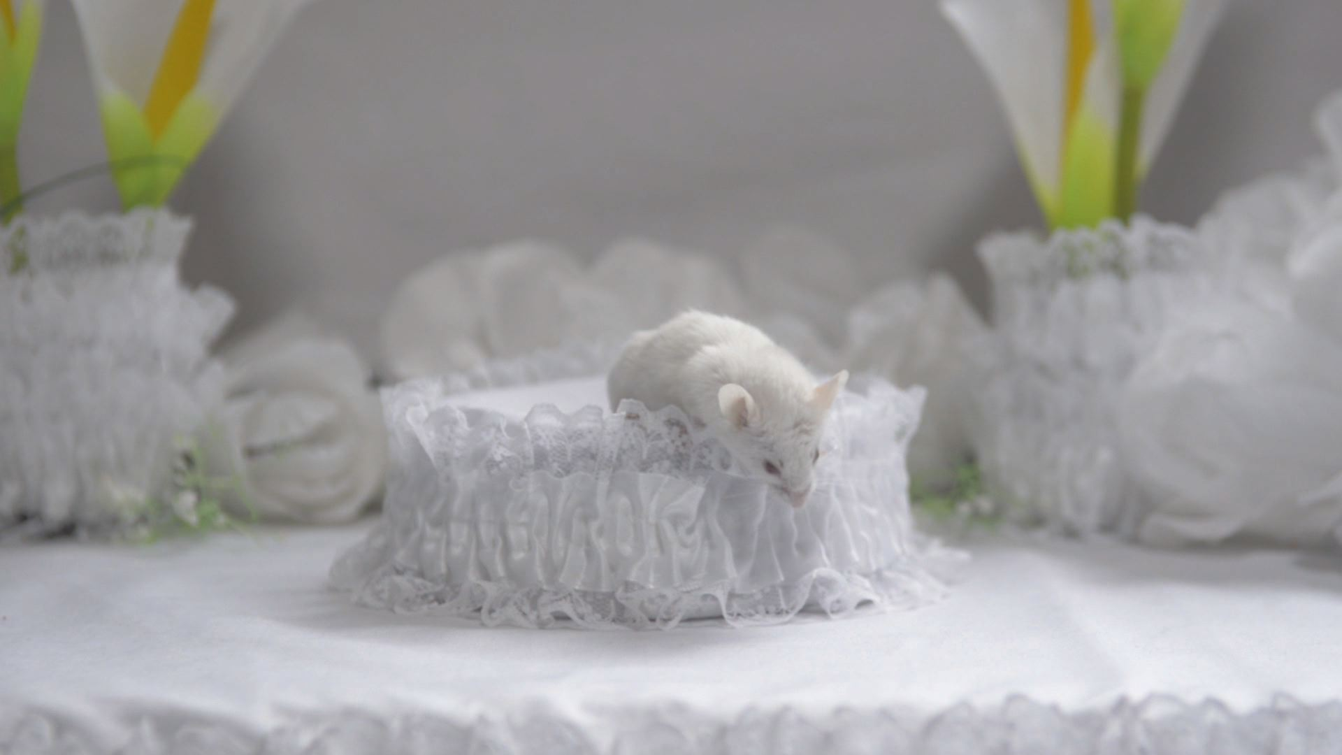 'White Anaesthesia (detail)'2_video still_three-channel video_2012.jpg.jpg