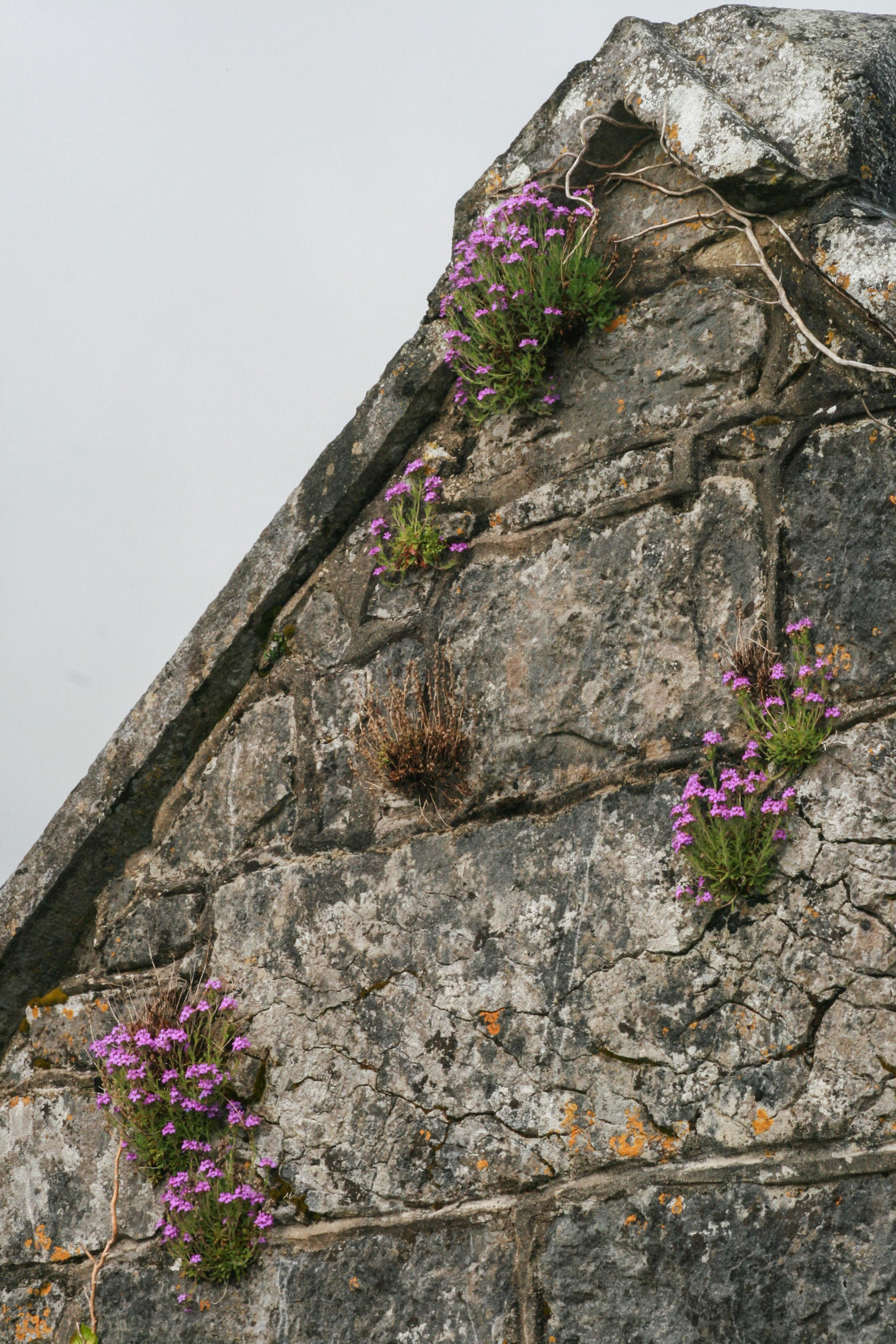 Flowers on the Wall-6551 low.jpg