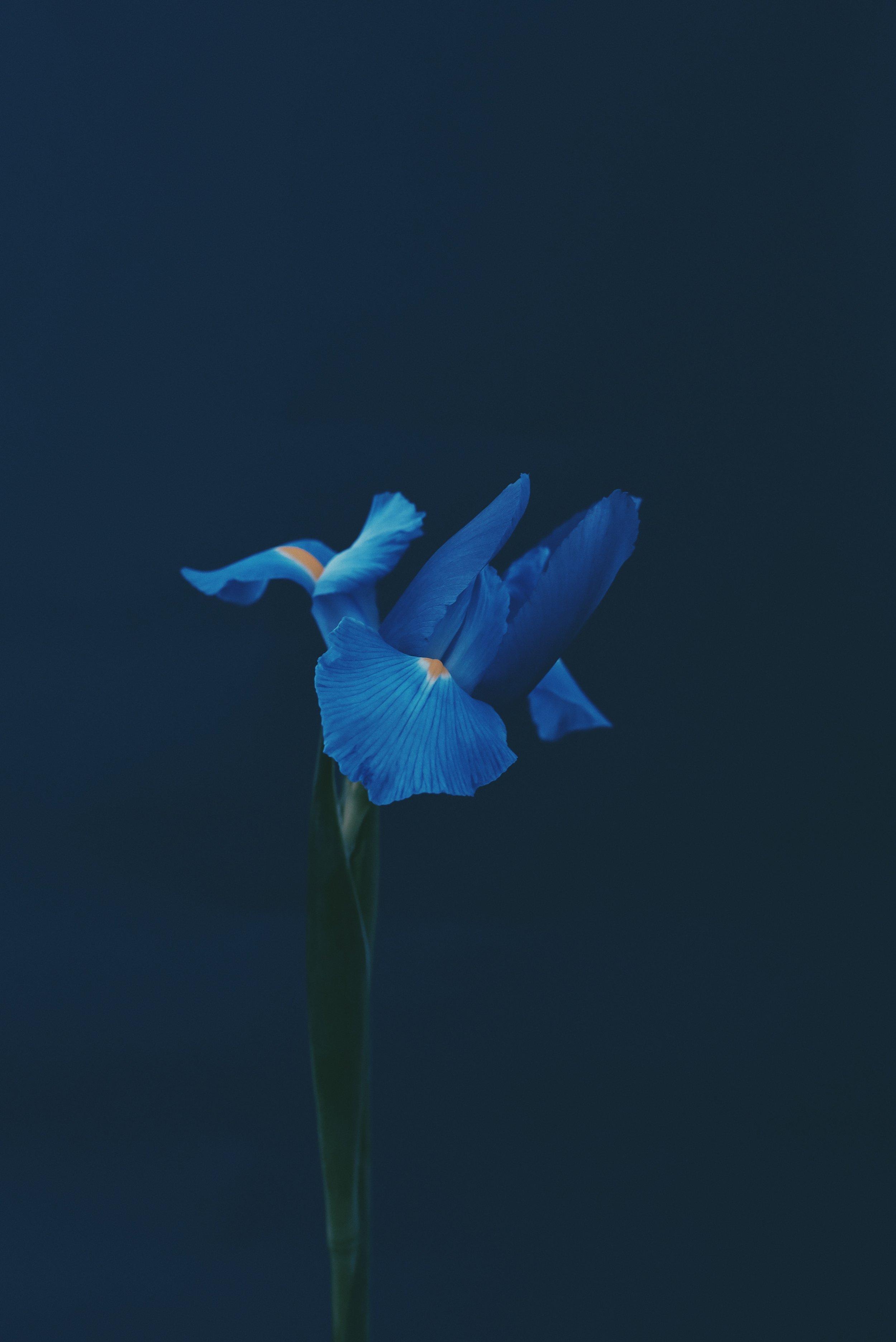 navy-blue (2).JPG