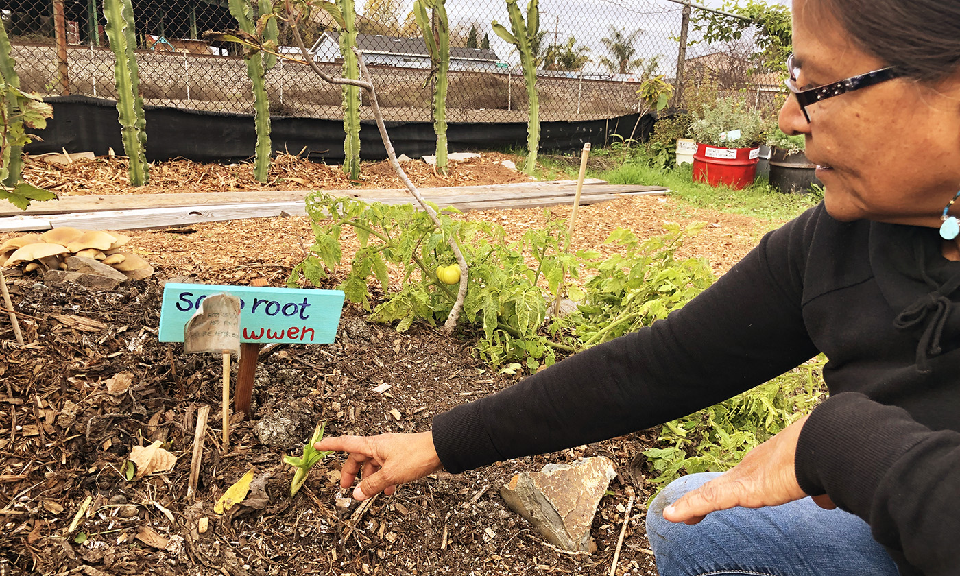 Johnella Larose points out the soap root plant that grows in the hugel raised bed. Photo by Deonna Anderson