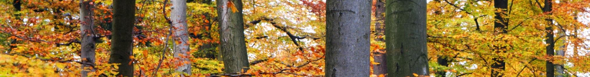 yellow_leaf_trees2.jpg