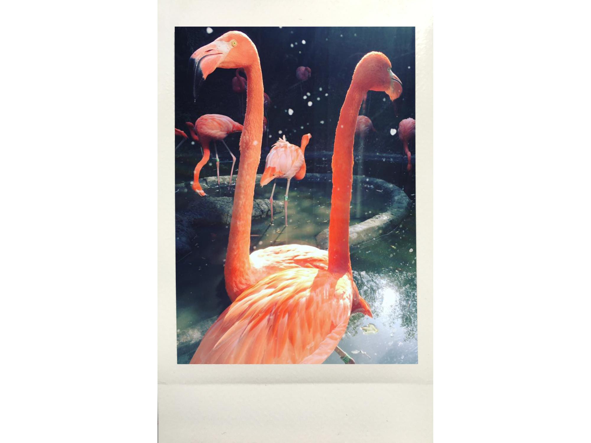 From Flusspferds to Flamingos  Vienna, Austria