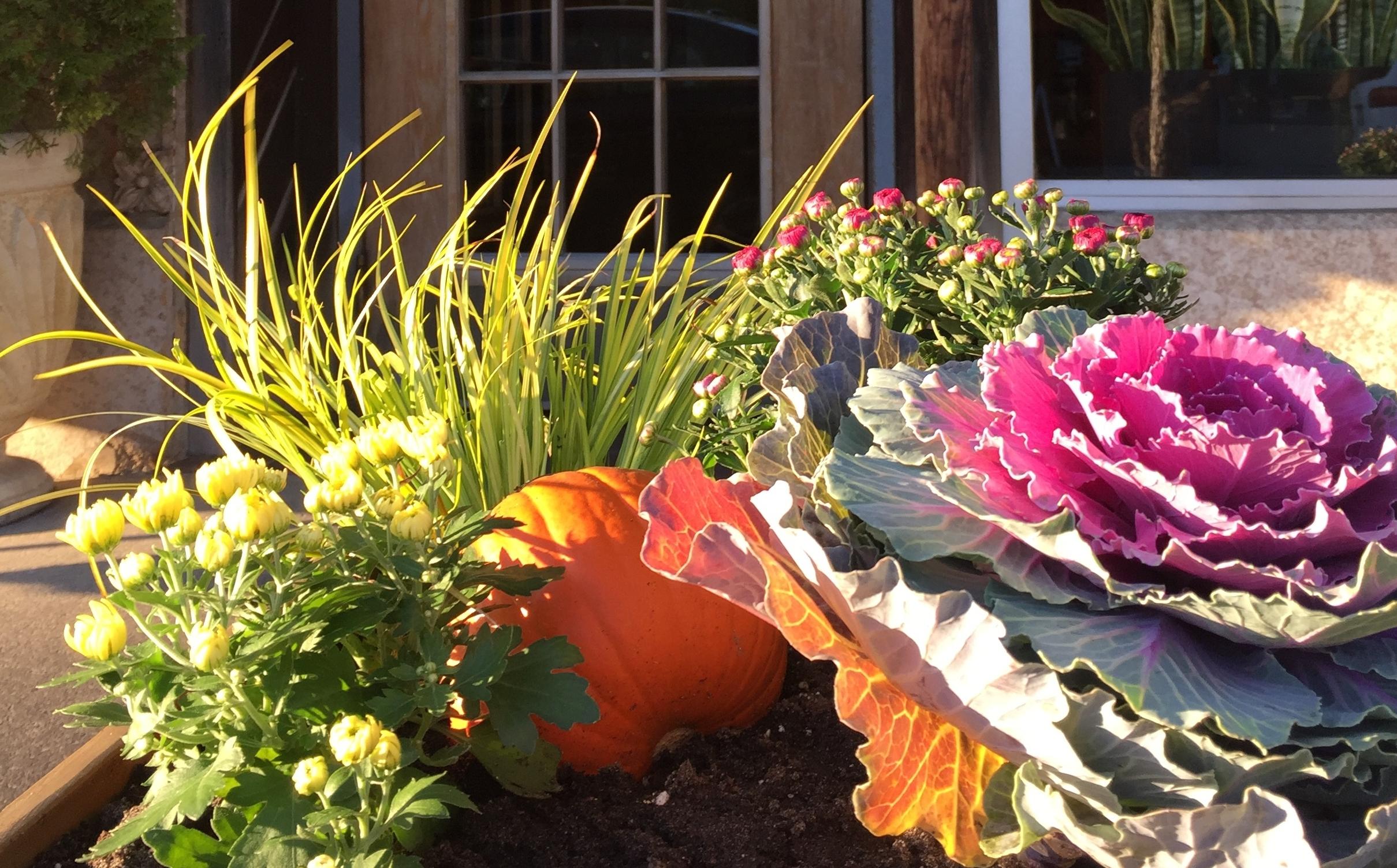 Fall Planter Very Close Up.jpg