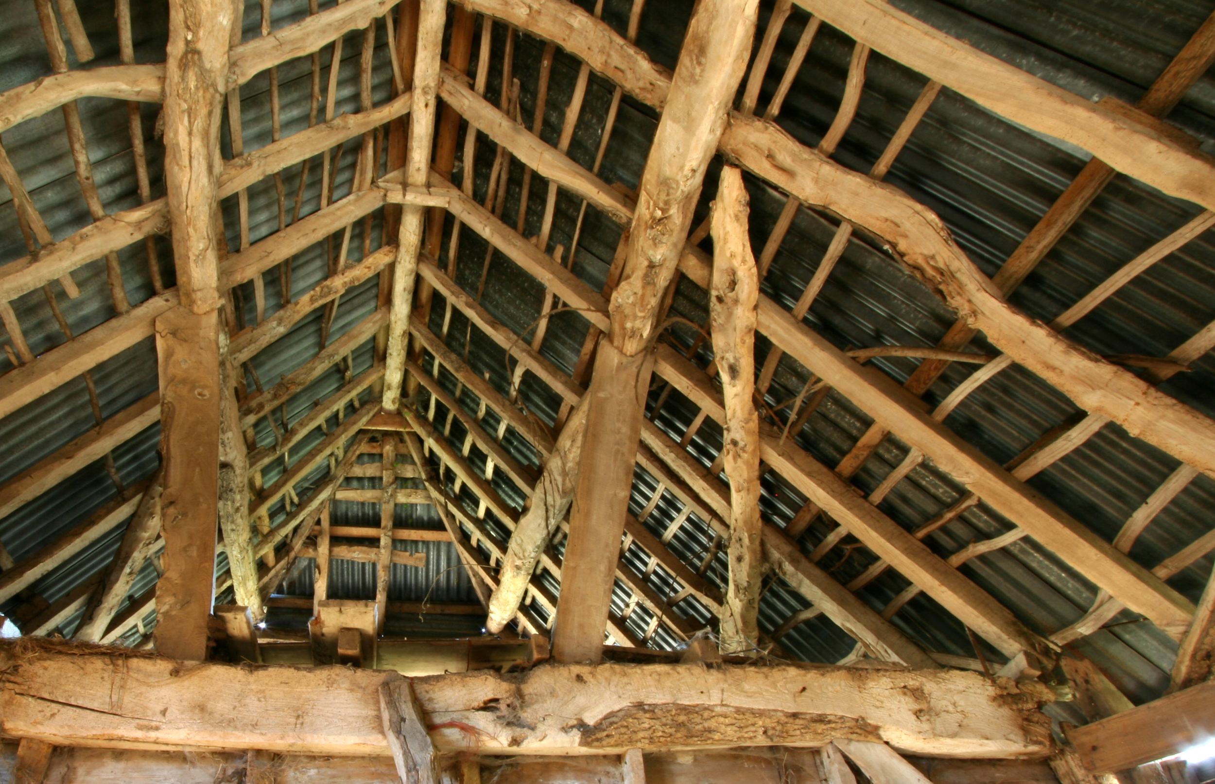 Albion Archaeology project. Roof of timber-framed barn, Buckinghamshire, December 2015