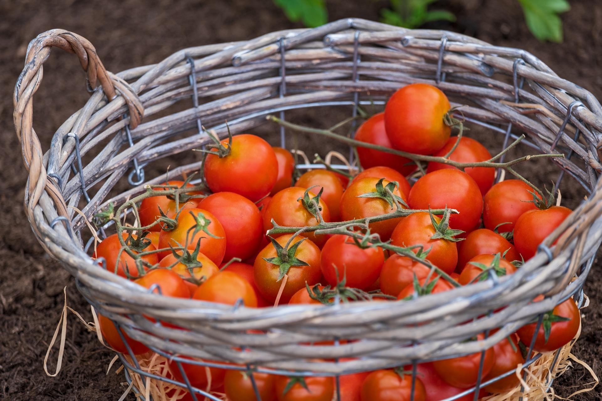 tomatoes-4180020_1920 (1).jpg