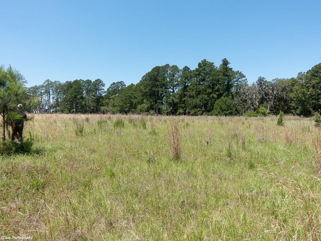 Skeet Field