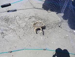 Crab-&-Shrimp-46.jpg