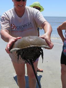 Crab-&-Shrimp-45.jpg