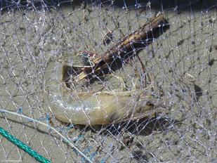 Crab-&-Shrimp-29.jpg