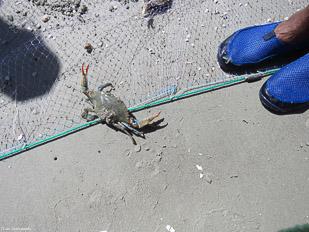 Crab-&-Shrimp-13.jpg