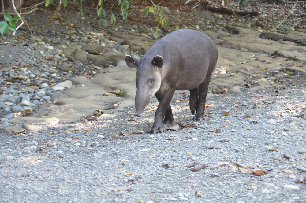 Exciting wildlife on Travel With Ann adventure in Costa Rica