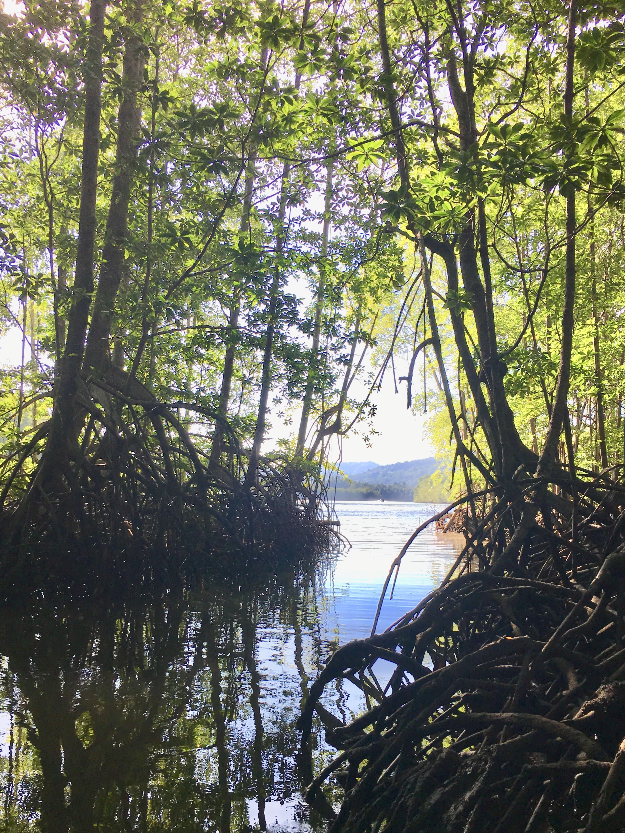 Osa Part 1 Mangrove photos (3).jpg