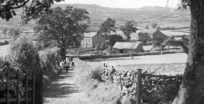 Rustic lane:village copy.jpg