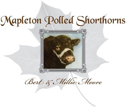 Mapleton Polled Shorthorns (logo)cropped.jpg