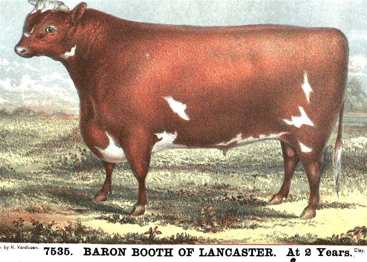 Baron Booth of Lancaster 7535.jpeg