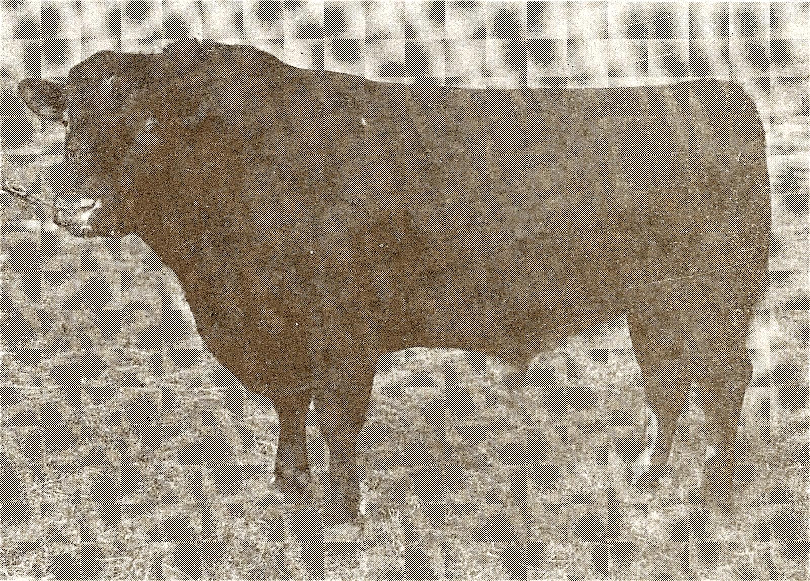 1901 Tippecanoe 44th x (Int'l. Jr. Champ).jpg