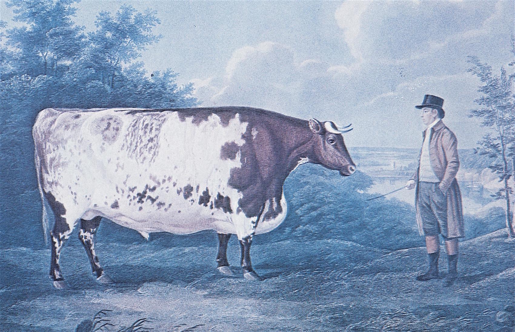 The Durham Ox.jpg