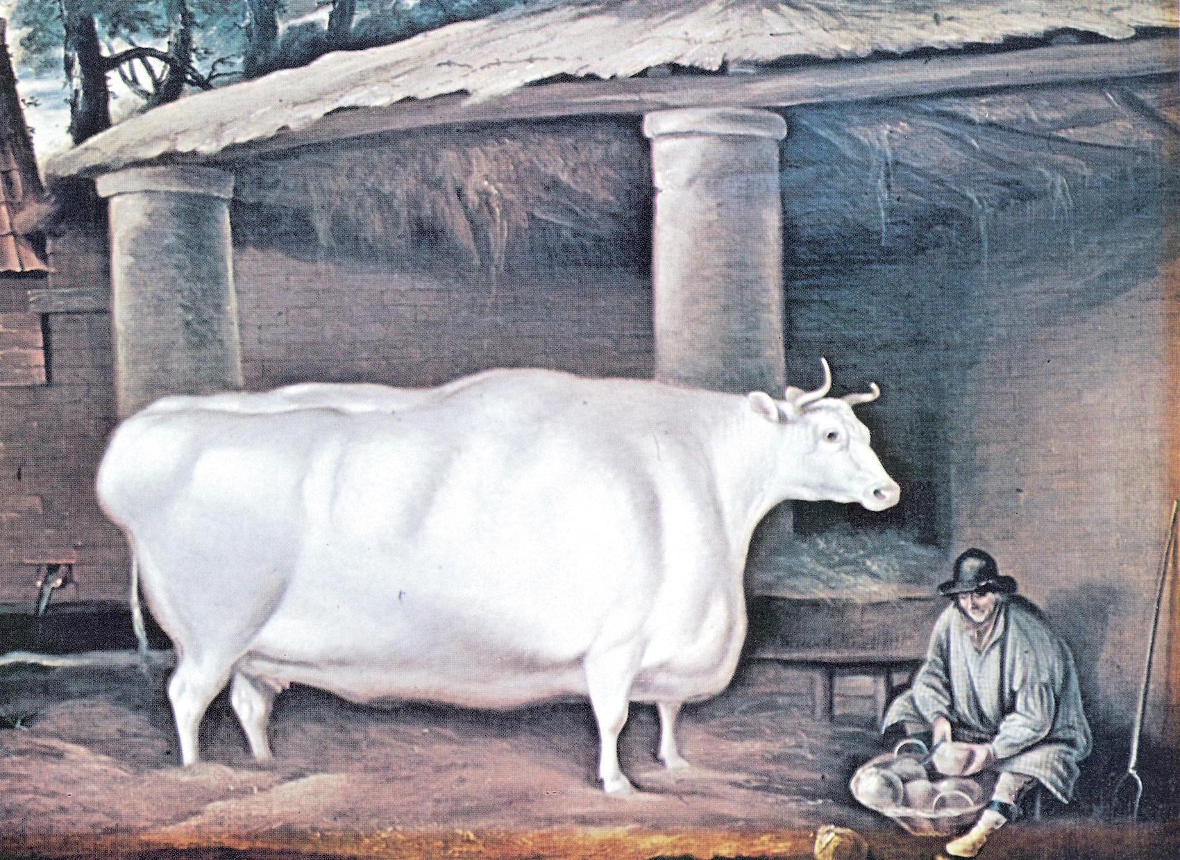 The White Heifer That Travelled.jpg