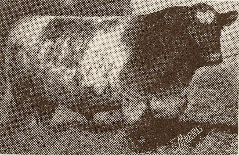 1919, '20 Roselawn Marshal x.jpg