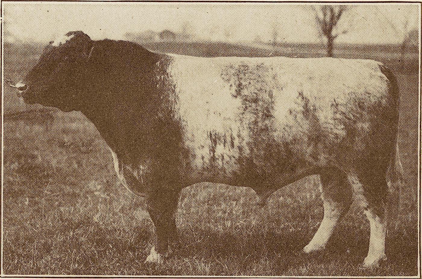 1918 Royal Stamp x.jpg