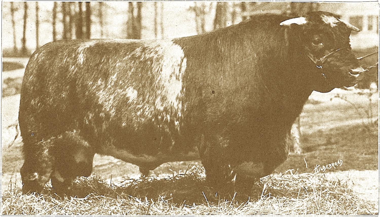 1926, '27, '28 Browndale Count.JPG