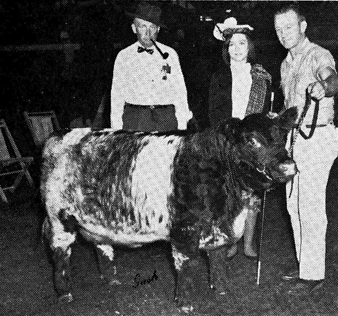 Shorthorn Yearling Heifer, 1960s