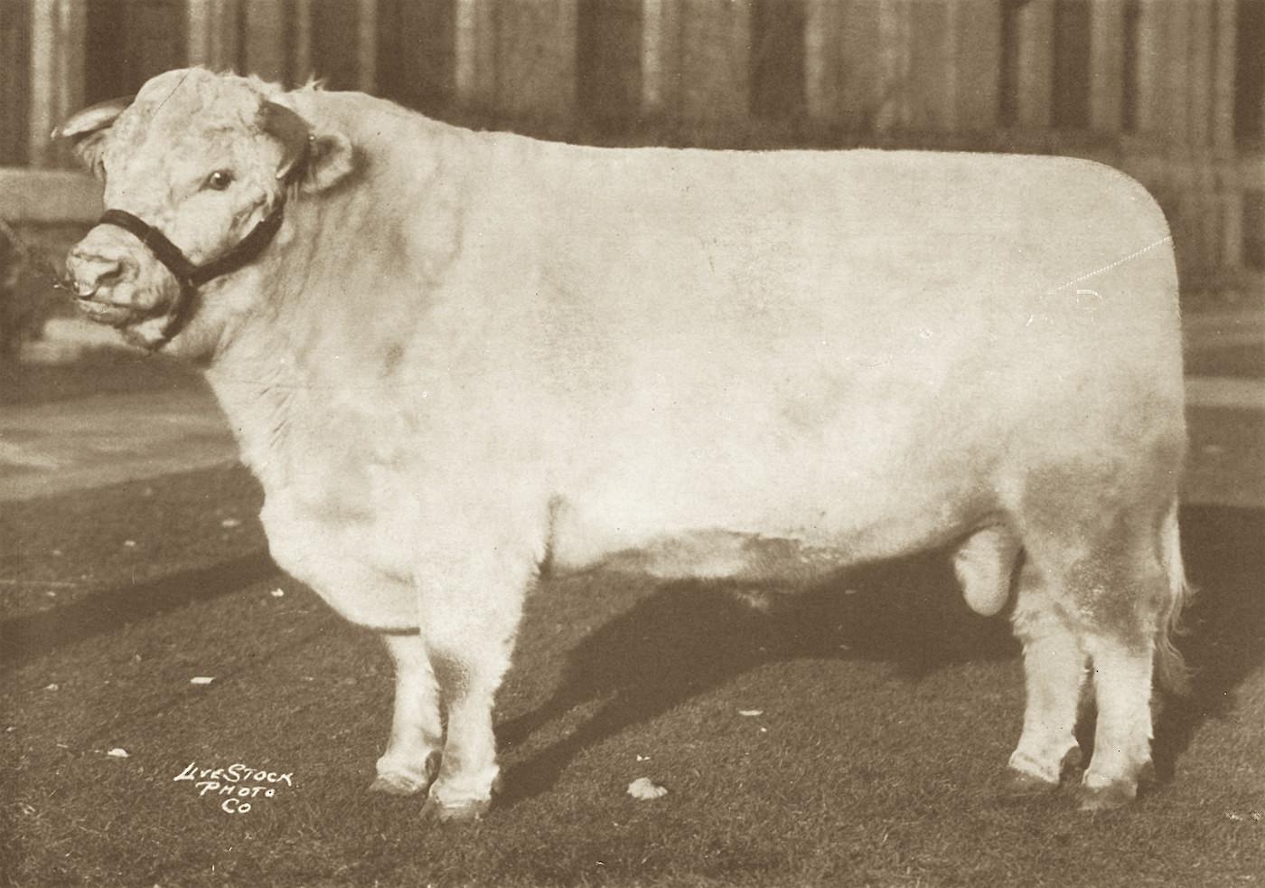 1925 King of the Fairies.JPG