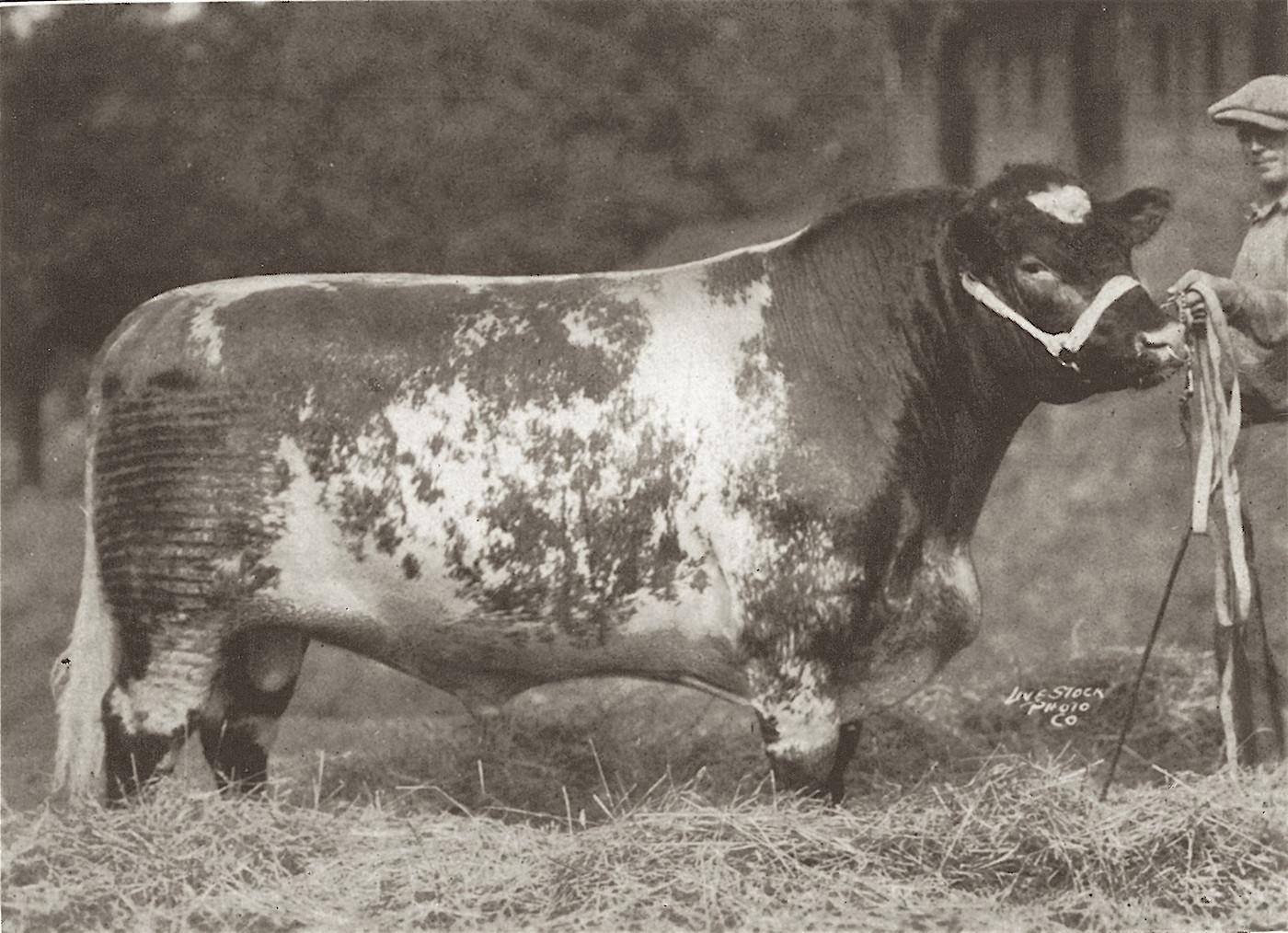 1925 Mardale x.JPG