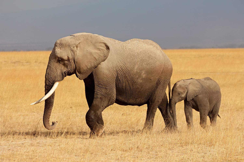 David Shepherd Wildlife Foundation.jpg