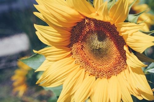 Flowers 10.jpeg