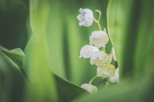 Flowers 12.jpeg
