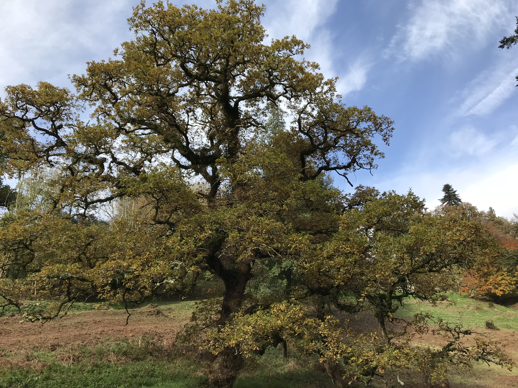 Sign the Tree Charter - On 6 November 2017, the 800th anniversary of the influential 1217 Charter of the Forest, the Woodland Trust launched the Charter for Trees, Woods and People.The Tree Charter will draw its strength from the hundreds of thousands of people across the UK that sign.