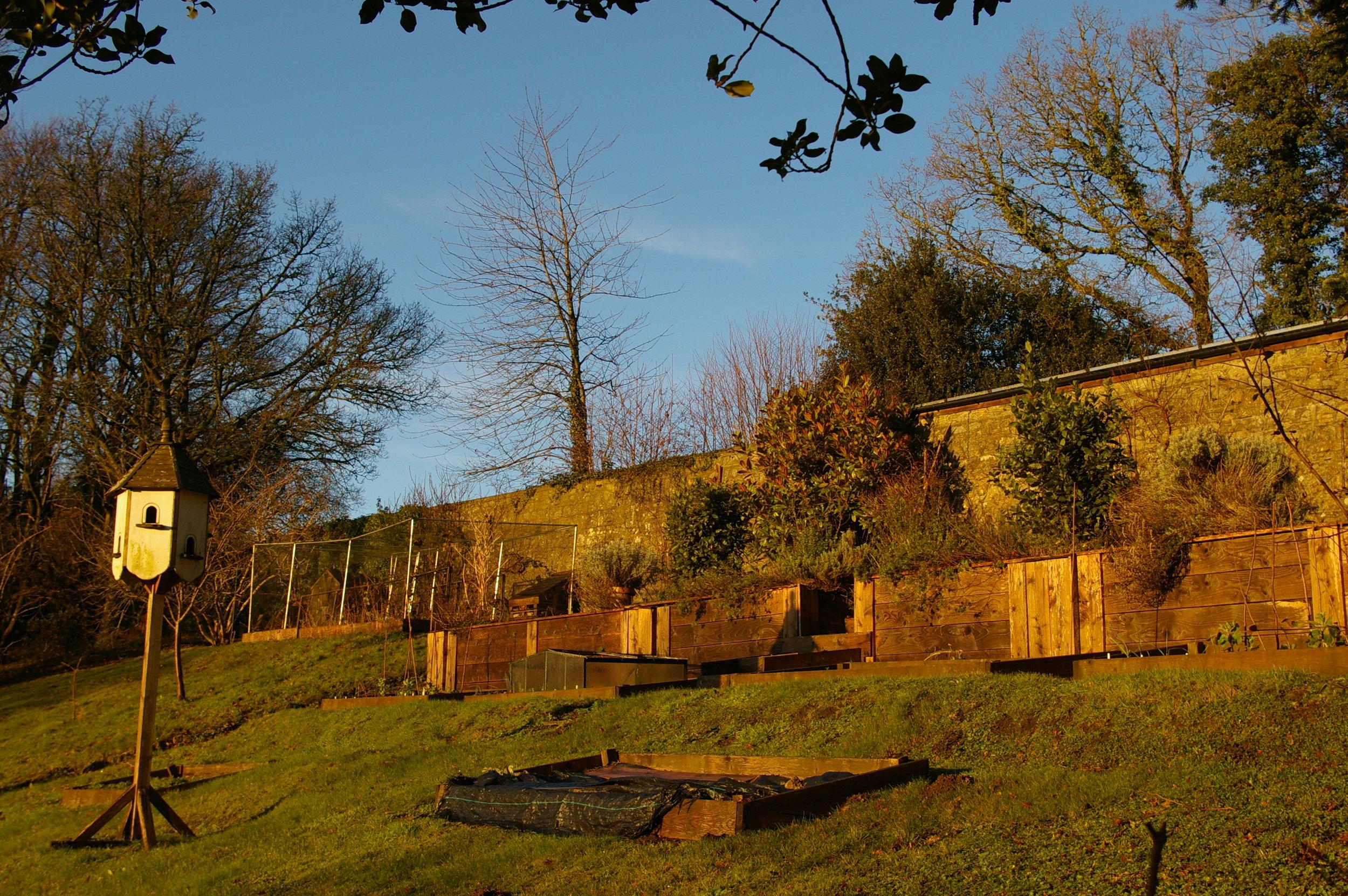 Veg garden in morning sun